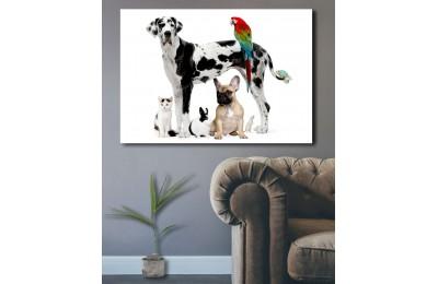 srvt2 - Kedi, Köpek, Tavşan, Papağan, Hamster, Pet Shop - Veteriner Kanvas Tablo