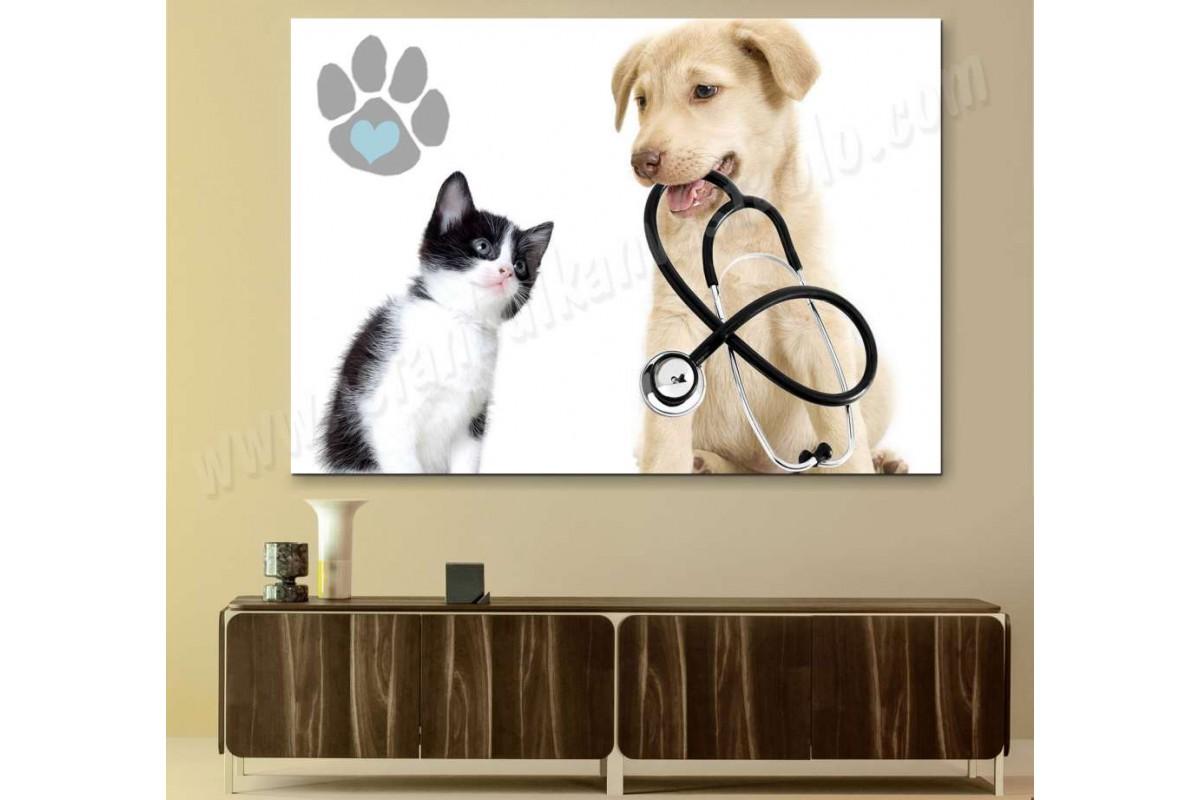 srvt4 - Yavru Köpek ve Yavru Kedi Veteriner, Pet Shop Kanvas Tablo