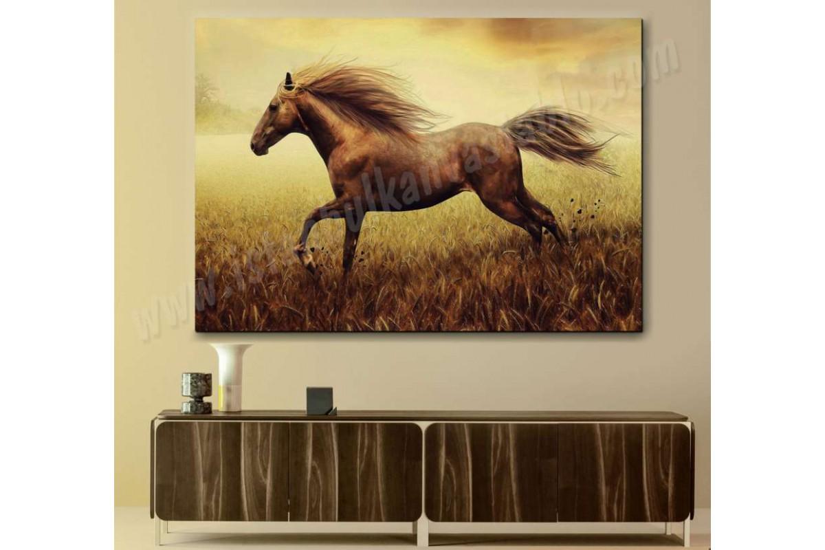 srk39 - Başak Tarlasında Koşan Vahşi At, Yılkı, Aygır, Kısrak Kanvas Duvar Tablosu