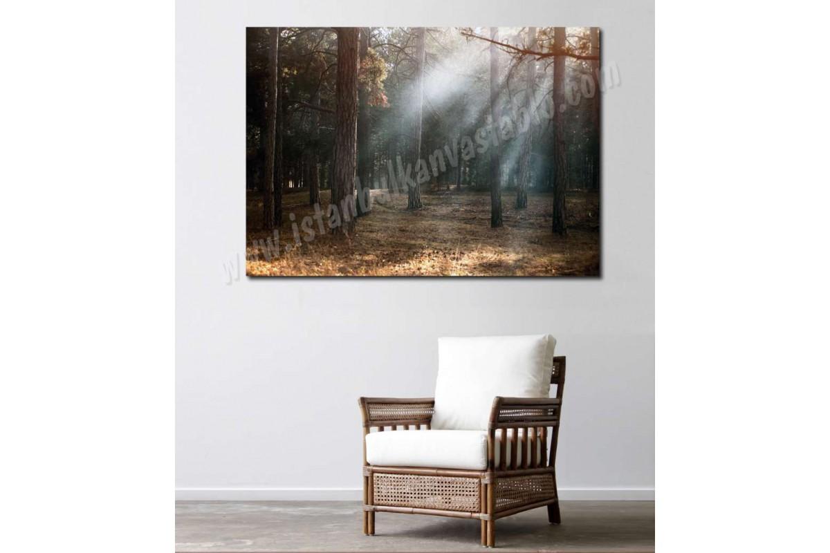 srkm55 - Sonbahar Orman ve Güneş Işıkları temalı dekoratif kanvas duvar tablosu