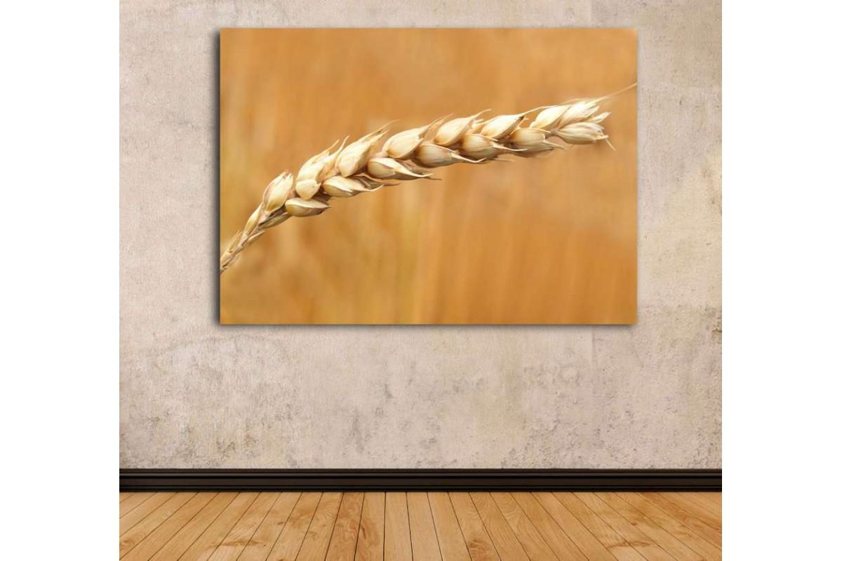 srrs20 - Başak Tanesi, Ekmek, Fırın, Unlu Mamül Kanvas Tablo